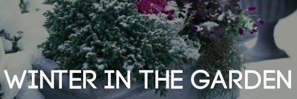 Wintering in the garden Headline