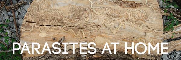 Parasites at Home Headline