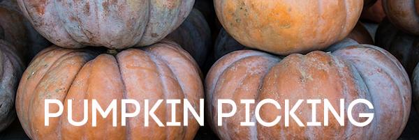 Pumpkin Picking Headline