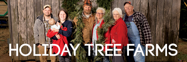 Holiday Tree Farm Headline