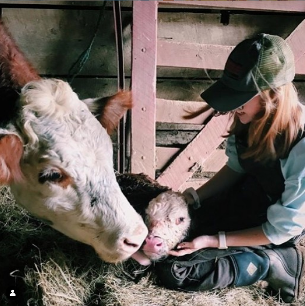 instagram image of a cow, newly born calf, and a female farmer