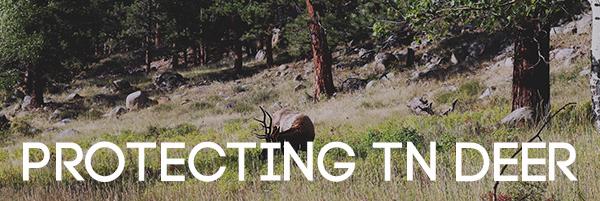 Protecting TN Deer
